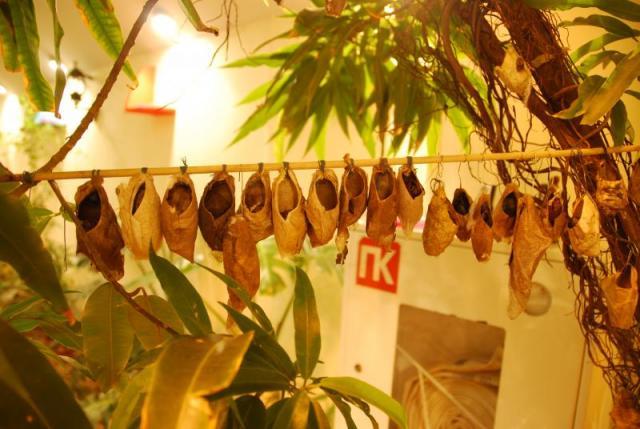 Бабочки в ТРК